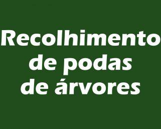 Atenção para o dia de recolhimento de podas de árvores