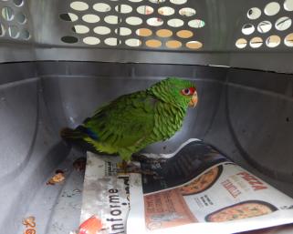 Secretaria Municipal de Meio Ambiente resgata ave ameaçada de extinção