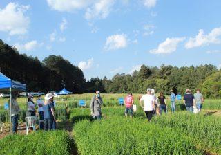 Jovens Serafinenses Visitam Campo Experimental da Embrapa Trigo